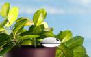 Koubachi: WLAN-Pflanzensensor für innen und außen
