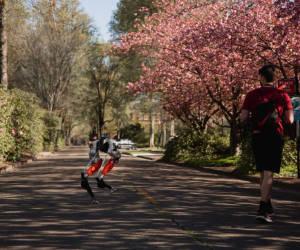 KI-Roboter «Cassie» läuft fünf Kilometer