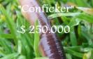 """250.000 $ """"Kopfgeld"""" auf Conficker-Autor"""