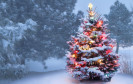 Bäume per Post versenden? Warum nicht. Immer mehr klassische Offline-Branchen entdecken den E-Commerce für sich, auch die Weihnachtsbaumverkäufer.