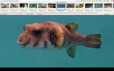 Im Vollbildmodus des Faststone Image Viewers, den Sie mit einem Doppelklick auf eines Ihrer Bilder erreichen, bieten Fly-out-Menüs Zugriff auf alle wichtigen Funktionen. Diese Menüs öffnen sich, wenn Sie den Mauszeiger an den Bildschirmrand bewegen.